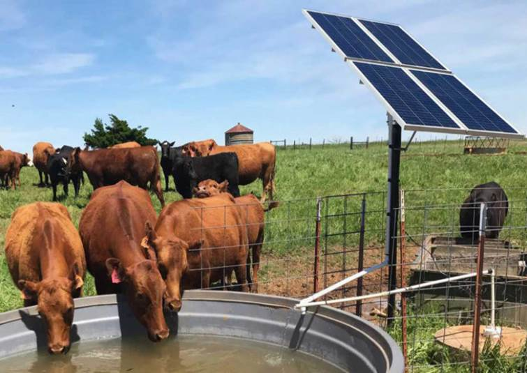 Solar Water Pumps For Livestock